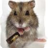 """Оппозитный """"Заповедник"""" - последнее сообщение от Old_Hamster"""